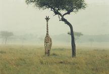 fauna etc