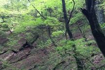 20120505 Mt. Mitake