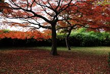 Autumn leaves / 今まで撮りためた紅葉です。 It is the colored leaves that are pooled to take until now.