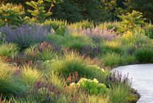 modern perennial planting design