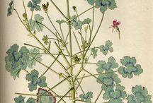 ilustrace rostlin.....