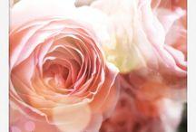 Kukkia, tuoksuja...