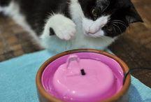 Ιδεες για νερο γατας