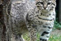 Cicák,cats, chats