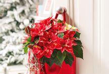 Sweet Christmas Home