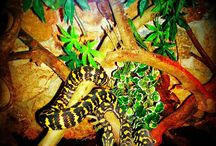Ζώα / Animals / http://elenitranaka.blogspot.gr/2015/05/animals.html