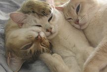 Cats / Wat een schatjes