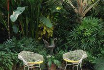 Pool / Garden