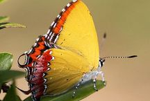 Butterfly / Beauty - Natury - World - Flower - Animals