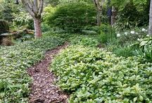 Shady woodland planting under trees / Lots of colour can grow in shade!