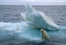 Ice Bears at Vacations / Travelers from Explura has shown a very beautiful travel vacation photos of Bears at Polar and Arctic vacation..