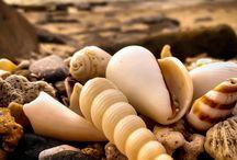 Nature~Sea Shells