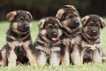 Dogs/Puppies / by Teresa Davis