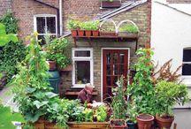 Garden {Small Space} / by Bren Haas