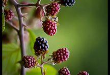 Scrumptious Blackberries / by Lynn Wanner