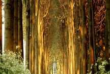 Path less traveled... / by Tisha Lyn { Photography