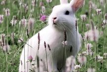 Springtime  / by Jora Impala