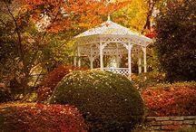 Autumn season / Leaf fall time