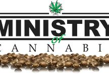 Ministry of Cannabis Seeds / Ministry of Cannabis, a feminized and autoflowering cannabis seeds breeder based in Barcelona, Spain - Amsterdam, The Netherlands