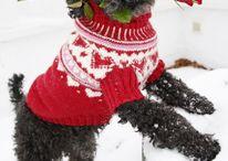 cappottino per cani