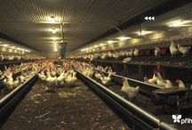 Prihoda Fabric Duct in Argriculture / A few Agriculture applications we've designed and supplied Fabric Ducting for