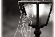 Pavučiny, kapky vody...