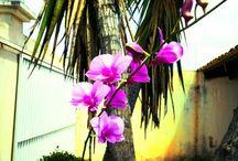 série orquídeas