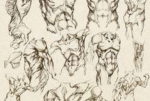 Szkice/Anatomia