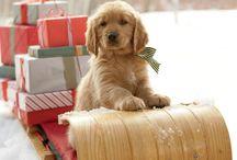 Cute animals =) / by Teri Dawn