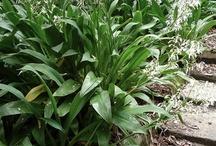 Plants NZ garden