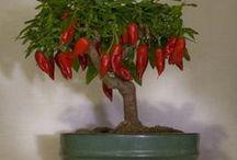 Little art plants
