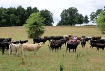 Our Farm / Home Sweet Home! We're a 5th generation cattle farm in Missouri and we raise all-nature, pasture-raised, grass-fed beef.