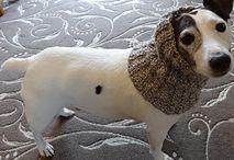 crochet for pets