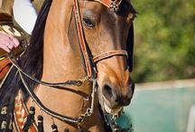 Horse decorations