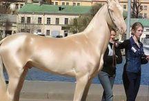 Foro Horses / La web de los caballos