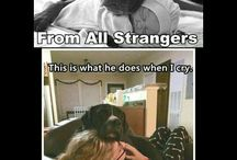 dogs are awesome ❤