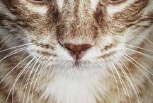Feline Majesty