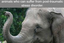 History facts on Elephants