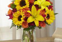 Fall Flowers / Amazing Autumn Flowers!