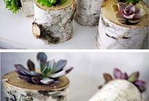 frø og planter
