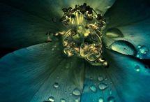 Rain flowers & drops ♥