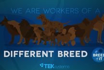 Breed of IT / IT workers are a breed of their own. Watch our latest video and check out the roles that fit your IT team members. http://teksyste.ms/1HBeqZX #BreedofIT
