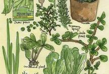 Planting Time / by Dorine Ledgerwood