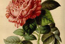 Botaniska bilder
