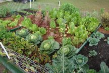 Gardening / Sustrainable food production