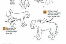 Pet Health and Wellness