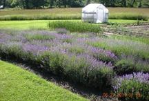 Our Gardens / The gardens at Stockbridge Farm.