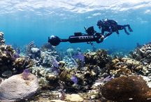Coral Reefs: Secret Cities of the Sea / Immerse yourself in the underwater world of tropical coral reefs, some of the most biodiverse environments in the world. Open until 13 Sep 2015. In partnership with Catlin Group Ltd.  Tweet or instagram your #CoralReefs photos from the exhibition and you could win a prize. To find out how and to read the Ts and Cs visit http://bit.ly/Coral-Reefs-monthly-prize-draw / by Natural History Museum, London