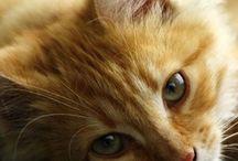 Kociaki / Nazwa stała się niewidzialna czy co?