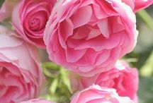 ~My Garden Grows Pink~ / by Michelle